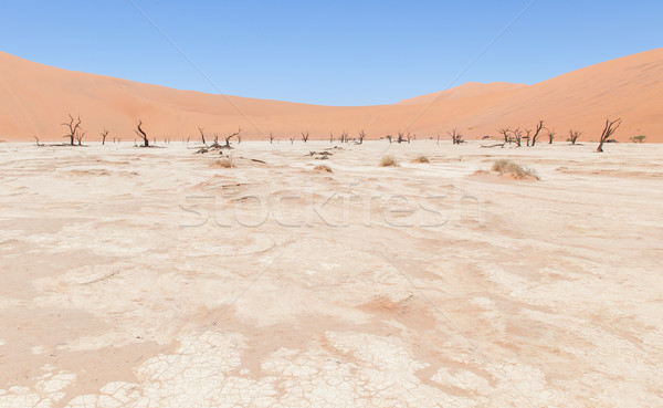 Dead acacia trees and red dunes of Namib desert Stock photo © michaklootwijk