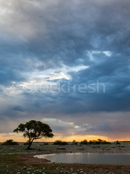 Picturesque tree and bushes silhouette over sunset Stock photo © michaklootwijk