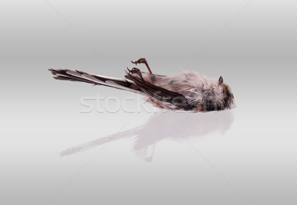 売り言葉 孤立した 白 側面図 眼 自然 ストックフォト © michaklootwijk