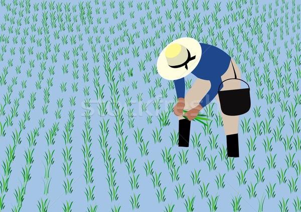 Landbouwer rijst Stockfoto © MichalEyal