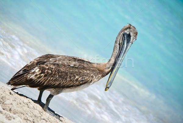 Stock fotó: Pózol · elvesz · törik · édenkert · tengerpart · víz