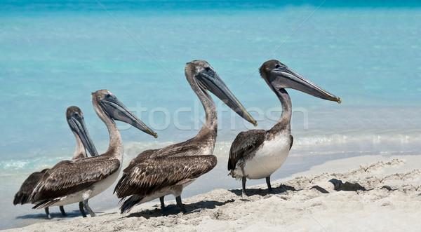 Ora di punta spiaggia acqua mare Ocean uccello Foto d'archivio © michelloiselle