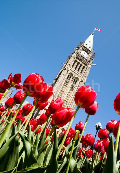 Spring Politics Stock photo © michelloiselle