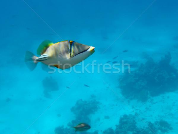 Ryb życia podwodne nurkowania morskich Zdjęcia stock © michey