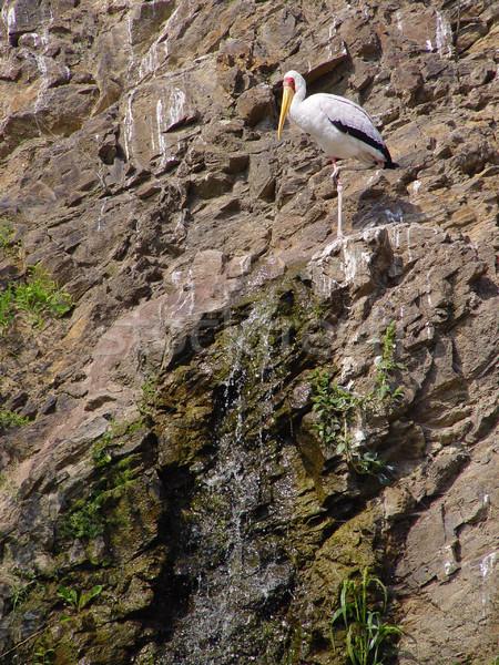 Rock wodospad sam biały ściany góry Zdjęcia stock © michey