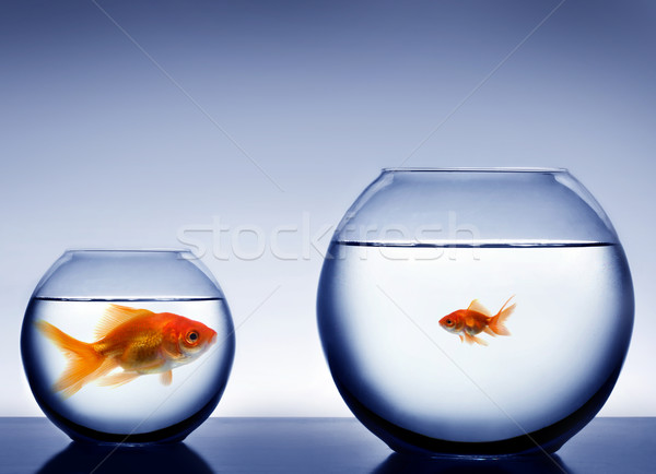 Studio shot of a fish in bowl  Stock photo © mikdam