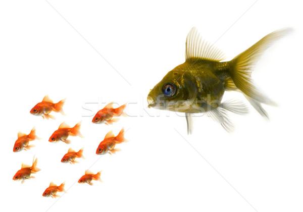 Arany hal áll ki tömeg Stock fotó © mikdam