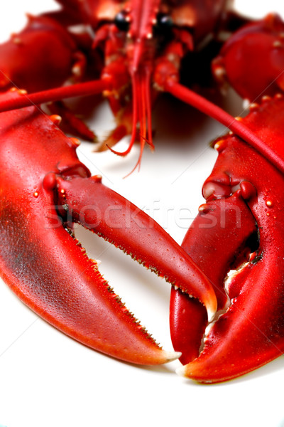 Lobster being prepped for cooking Stock photo © mikdam
