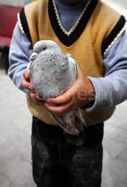 Ragazzi mano uccello colomba holding hands Foto d'archivio © mikdam
