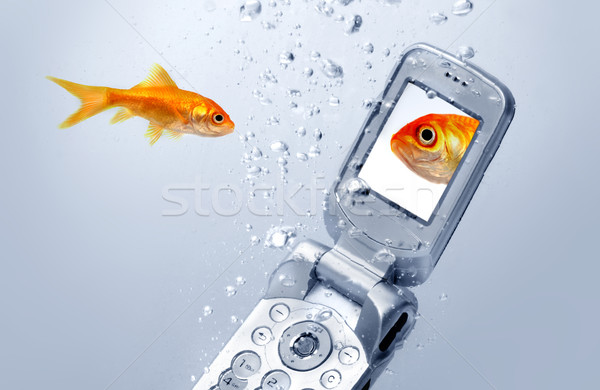 A goldfish swims by a cell phone Stock photo © mikdam