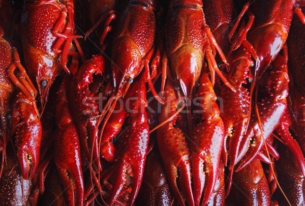 red crawfish Stock photo © mikdam