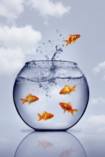 Stok fotoğraf: Akvaryum · balığı · atlama · dışarı · su · cam · dalga