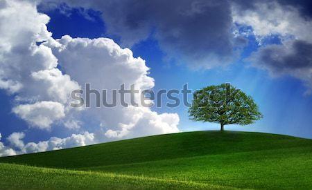 Stock fotó: Magányos · fa · zöld · kék · ég · fehér · felhők
