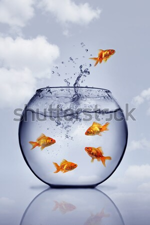 goldfish jumping out of the water from a crowded bowl  Stock photo © mikdam