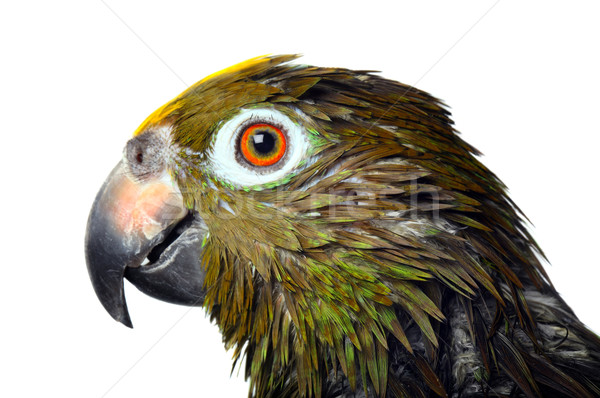 Foto stock: Papagaio · banho · verde · falar · animal · cores