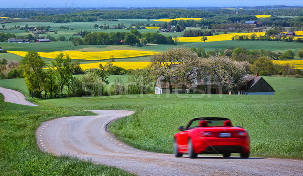 Yellow rapeseed fields and a red car  Stock photo © mikdam