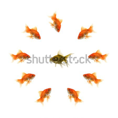Stock photo: Goldfish in a circle and a ugly fish in the middle