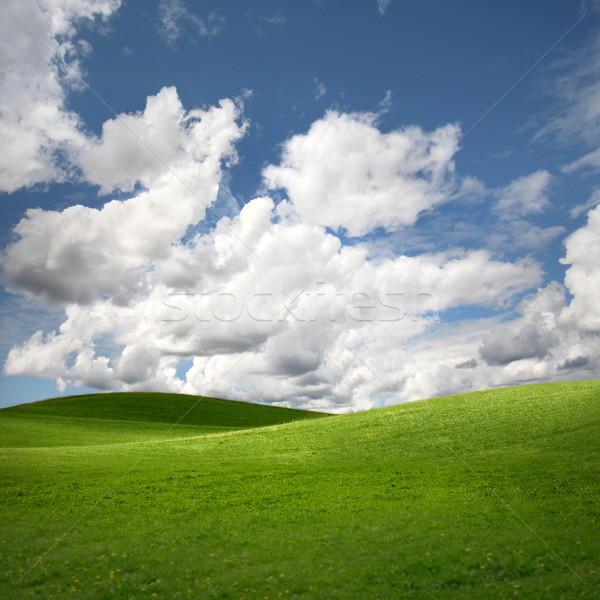 Zöld mező tájkép nyár űr kék Stock fotó © mikdam