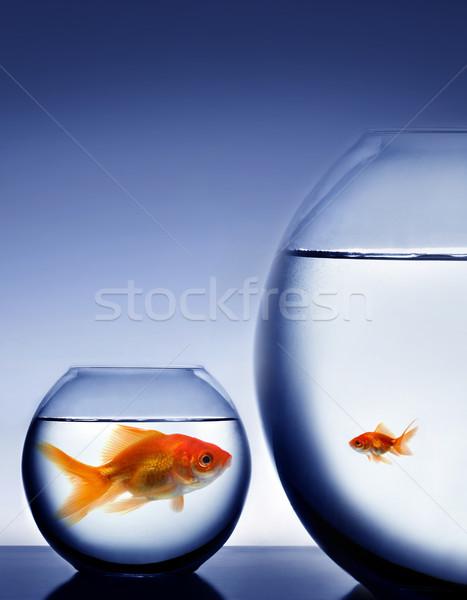 Сток-фото: рыбы · чаши · животного · Goldfish · мнение