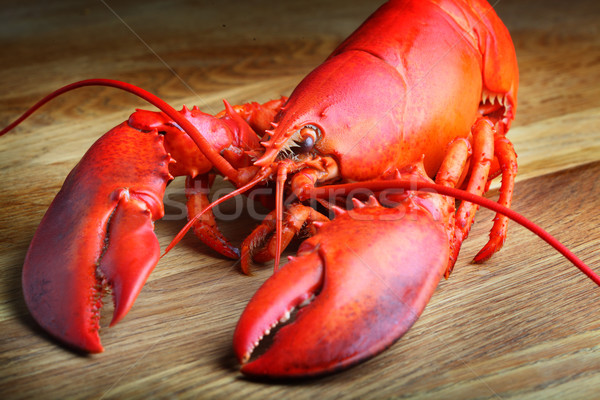 Red Lobster on wood Stock photo © mikdam