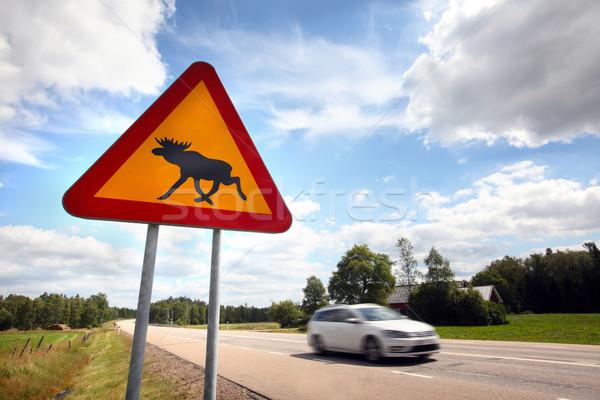 Alce assinar Suécia verão tráfego animal Foto stock © mikdam