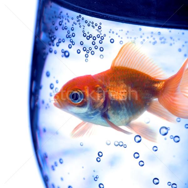 Сток-фото: воды · ванны · белый · чистой · дайвинг · пузыря