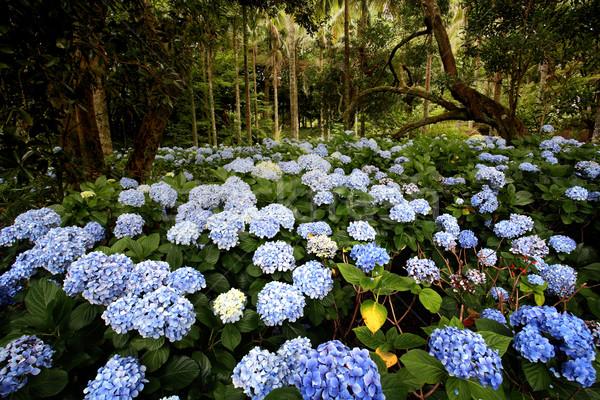 Fleur de printemps domaine fleurir Photo stock © mikdam