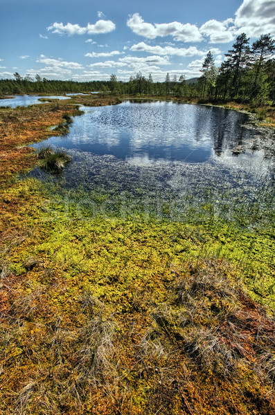 Bataklık İsveç çim yansıma Stok fotoğraf © mikdam