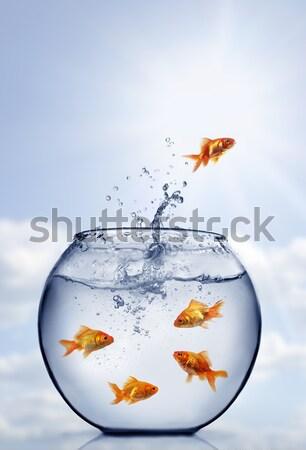 Foto stock: Peixe-dourado · saltando · fora · água · vidro · saltar