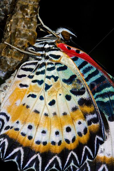 Pillangó újonnan színpad élet minta állat Stock fotó © mikdam