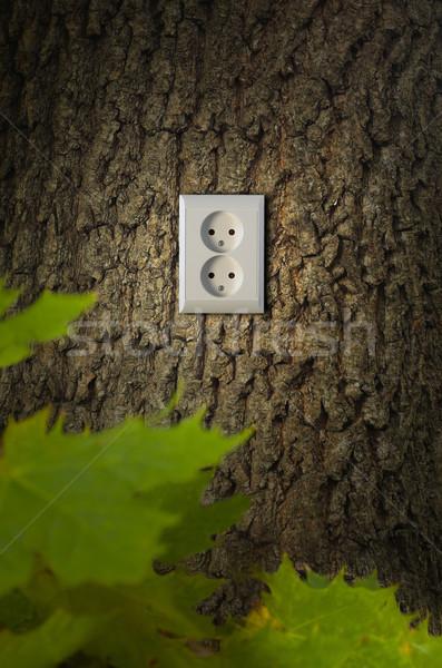 árbol energía planta ideas y Foto stock © mikdam