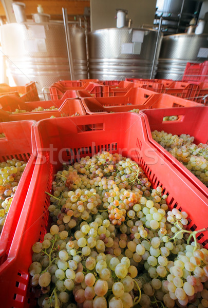 winemaking with grapes Stock photo © mikdam