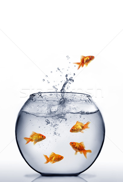 goldfisch springen heraus wasser glas welle. Black Bedroom Furniture Sets. Home Design Ideas