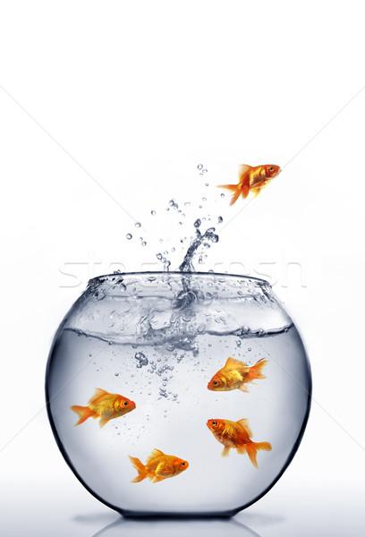 goldfisch springen wasser fisch glas direkt. Black Bedroom Furniture Sets. Home Design Ideas