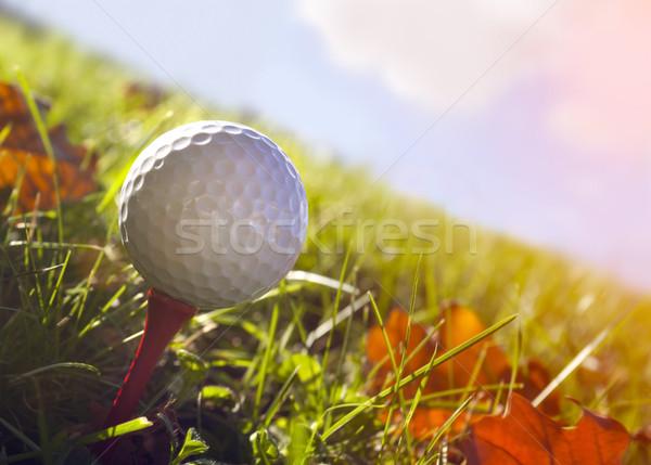 мяч для гольфа трава осень Сток-фото © mikdam