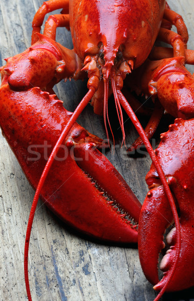whole red lobster on wood Stock photo © mikdam