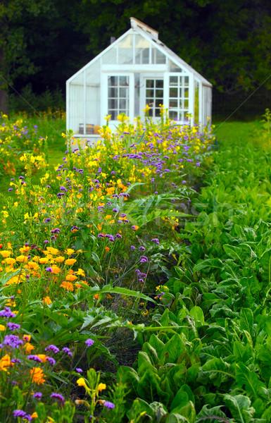 Foto d'archivio: Serra · alimentare · natura · giardino · farm