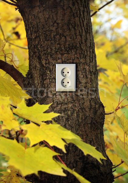 Groene energie energie kleur plant plug brandstof Stockfoto © mikdam