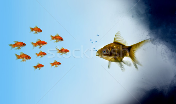 Stock photo: Goldfish fish in a polluted zone