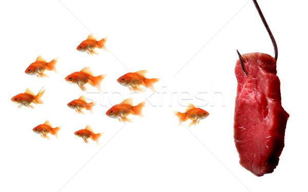 金魚 見える 餌 孤立した 白 魚 ストックフォト © mikdam