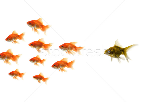 Stock photo: Gold fish standing out from the crowd