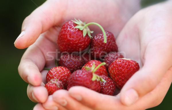 strawberries Stock photo © mikdam