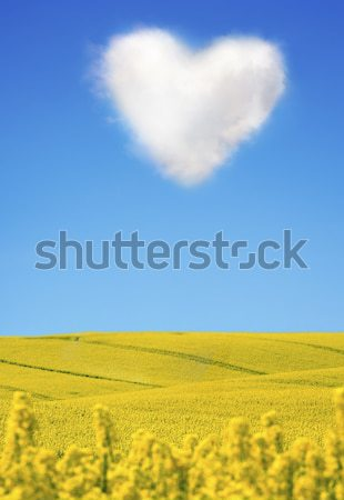 Oilseed and a heart shaped cloud Stock photo © mikdam