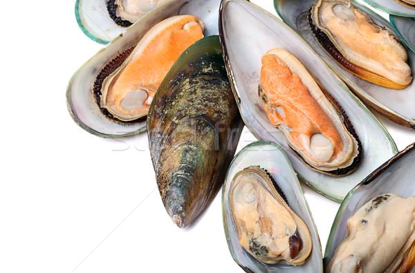 Mussel  Stock photo © mikdam