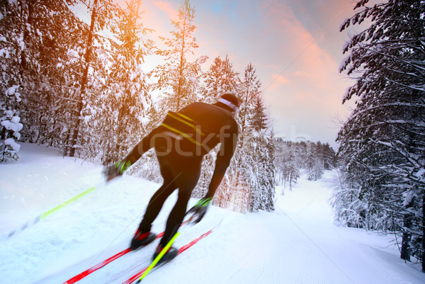Cross-country skiing in Sweden Stock photo © mikdam