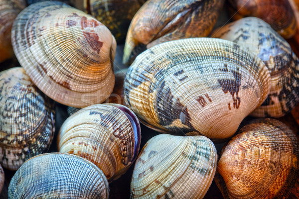 Shells of many types and sizes  Stock photo © mikdam