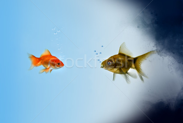Two Goldfish fish in a polluted zone Stock photo © mikdam