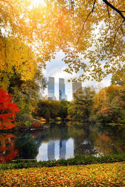 Central Park in NYC Stock photo © mikdam