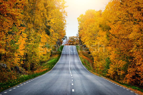 Fall scenic road in Sweden Stock photo © mikdam