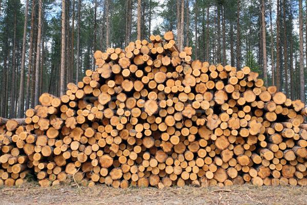 Freshly cut logs Stock photo © mikdam